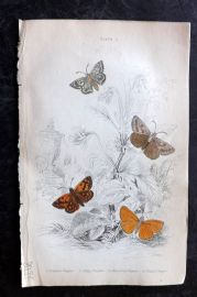 Jardine 1836 Hand Col Moth Print. Grizzled, Dingy, Chequered, Small Skipper 01
